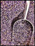 bulk-lavender-1lb861299