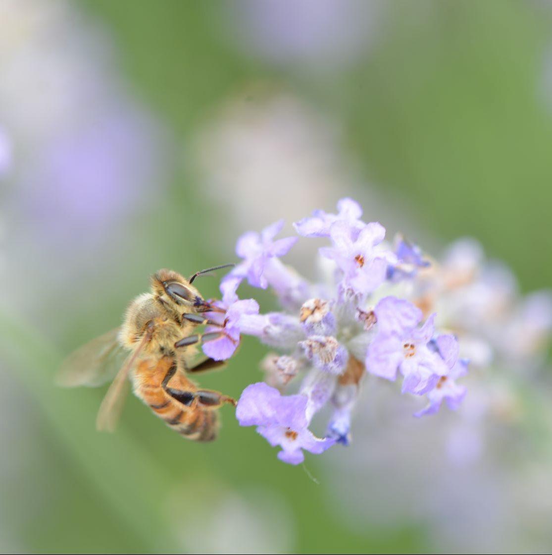 Pastel colours and lavender aromas
